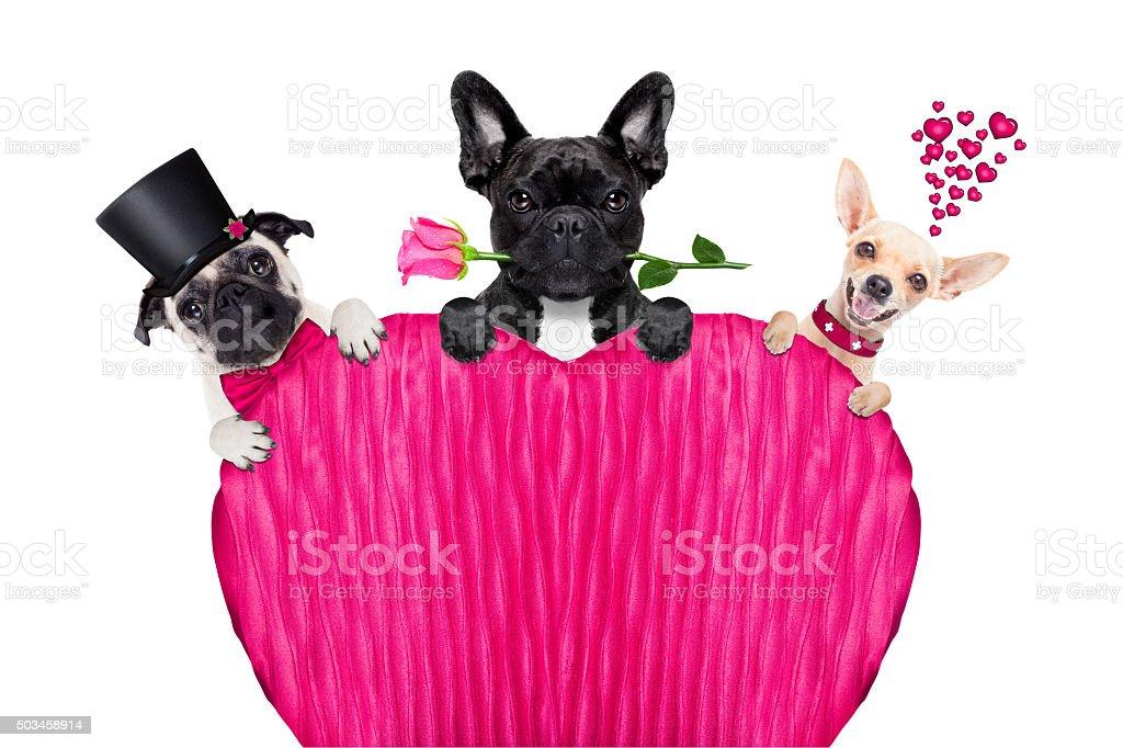valentines day row of dog stock photo