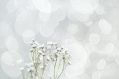 Valentine's Day. Sprig of flowers gypsophila. romantic card