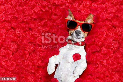 istock valentines dog in love 637351766