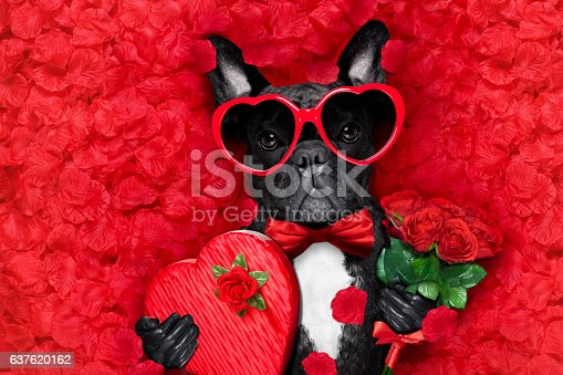 istock valentines dog in love 637620162