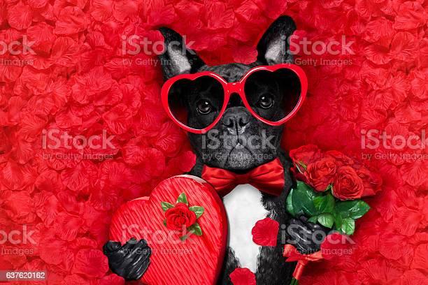 Valentines dog in love picture id637620162?b=1&k=6&m=637620162&s=612x612&h=cpzedc imftedk3gi765g5r6rgkyig3ki2kwwz1zjn8=