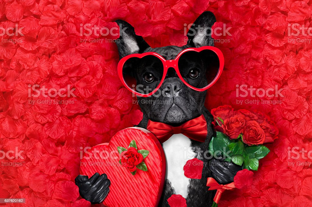 valentines dog in love stock photo