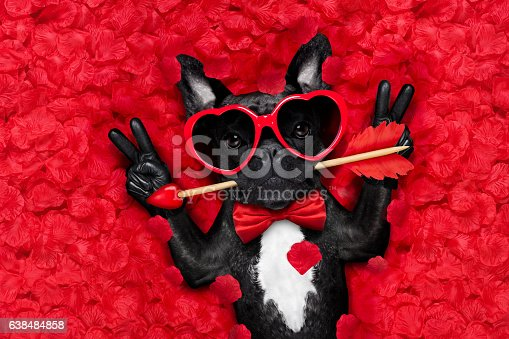 istock valentines dog in love 638484858