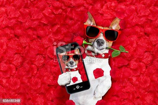 638484874 istock photo valentines dog in love 638485348