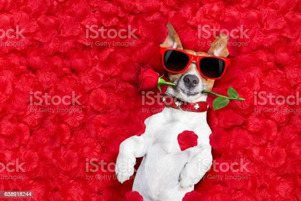 Valentines dog in love picture id638918244?b=1&k=6&m=638918244&s=612x612&h=keyvjbucd7nqgqk49zakh4hanuafwgzw9 vjz0er 14=
