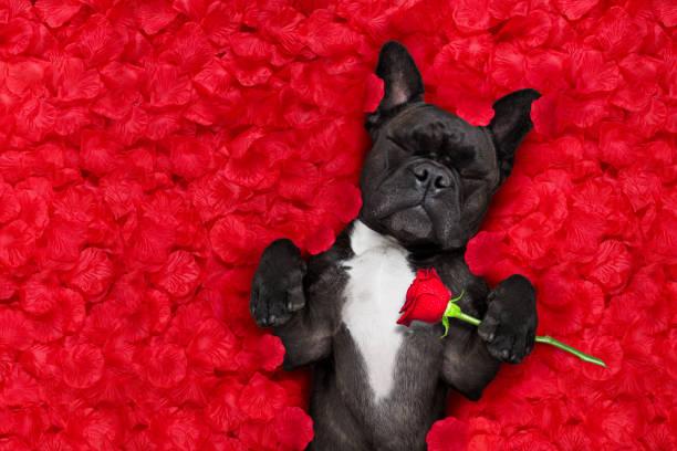 Valentines dog in love picture id640168686?b=1&k=6&m=640168686&s=612x612&w=0&h=dthqyii 2lgzjaytp9ylkdiylq4tm49ywrf1bsdvc q=