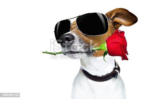 istock valentines dog in love with rose in mouth 638485160