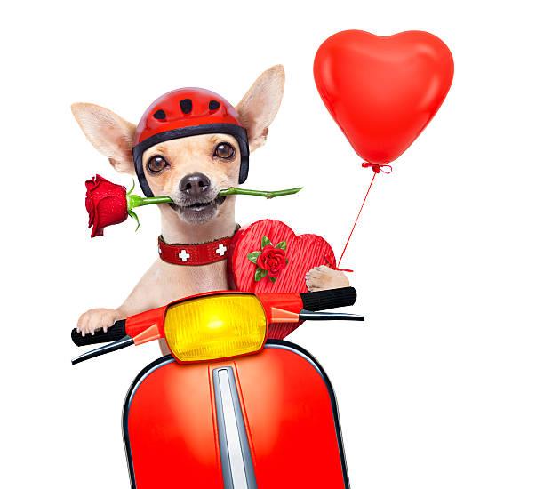 Valentines dog picture id536508997?b=1&k=6&m=536508997&s=612x612&w=0&h=1  iuqr3d5au8n9ap1nzw obq6 h6gfdu9 dvnyiize=