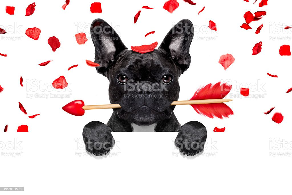 valentines dog stock photo