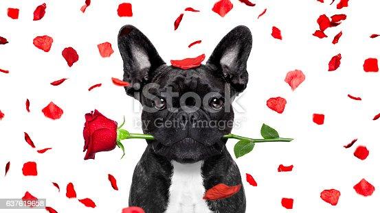 istock valentines dog 637619658