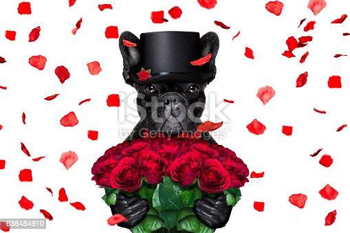 638484874 istock photo valentines dog 638484910