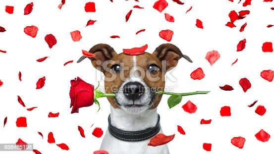 istock valentines dog 638485198