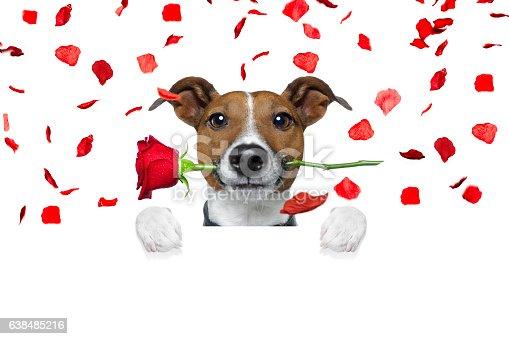 638484874 istock photo valentines dog 638485216
