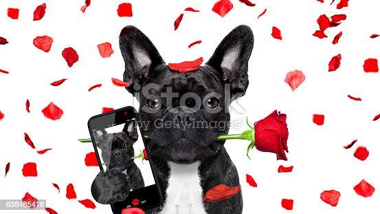 638484874 istock photo valentines dog selfie in love 638485418