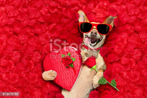 istock valentines dog   with  rose petals 913475752