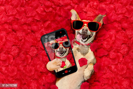 istock valentines dog   with  rose petals 913476298