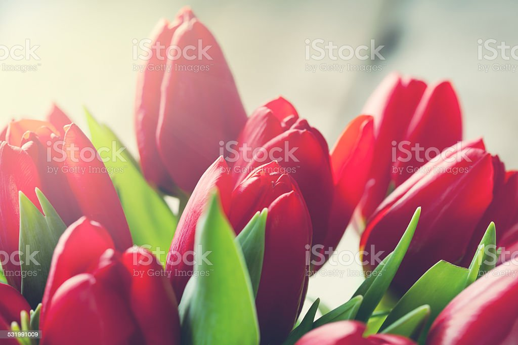 Valentine's stock photo