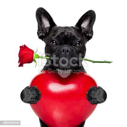 istock valentines rose dog 485059440