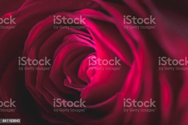 Valentines rose picture id641163640?b=1&k=6&m=641163640&s=612x612&h=lxpi xyehti1ngymapzamnapjcwszcykexephm8lkjm=