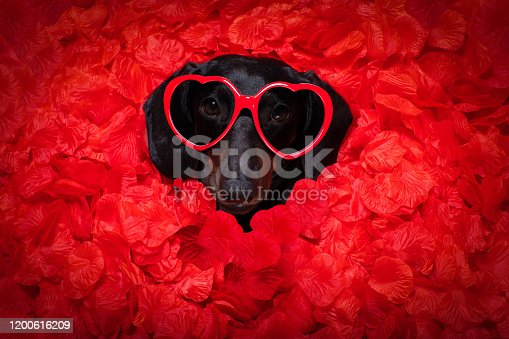 637619608 istock photo valentines wedding dog in love 1200616209