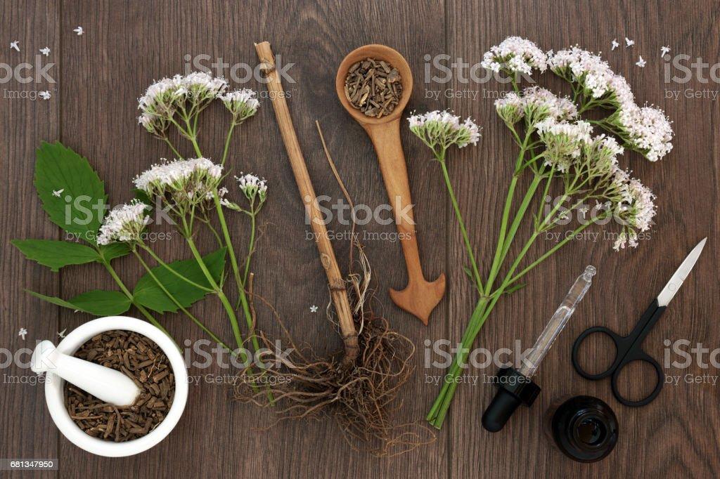 Baldrianwurzel Kräuter und Blumen – Foto