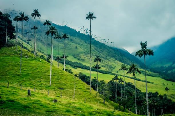 Valle de Cocora Landscape stock photo