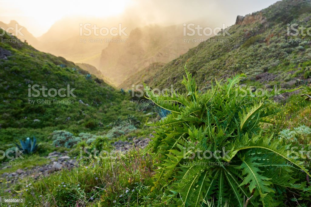 valley in Tenerife mountains royalty-free stock photo