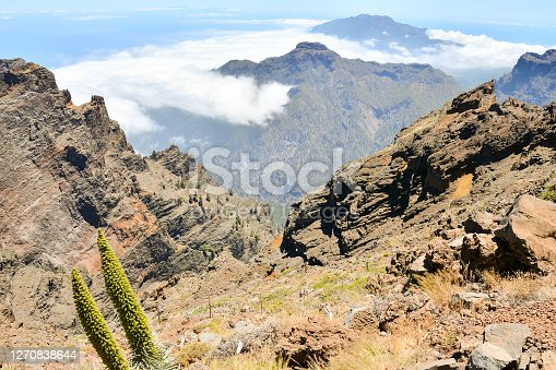 istock Valley in the Canary Islands 1270838644