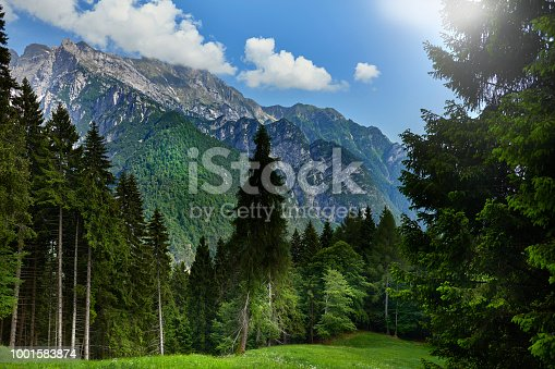 Trentino Italy high up in the Dolomites. Tirol area with high mountains. Tall pine trees in front of a meadow