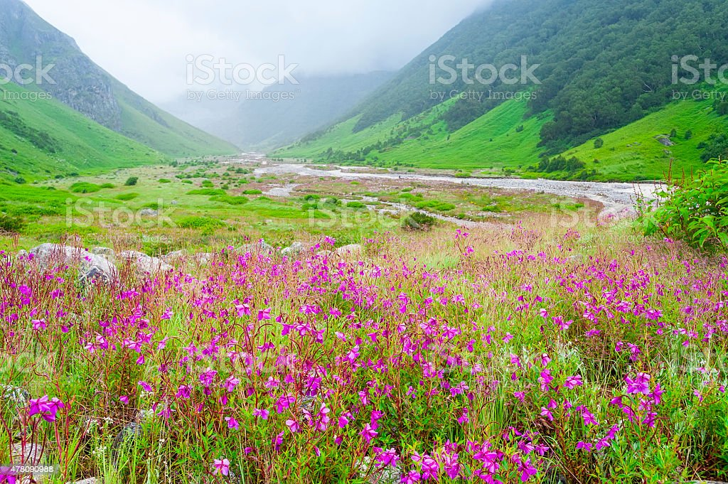 valley of flowers , india stock photo