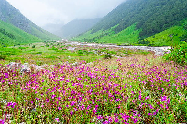valley of flowers , india - valley stock pictures, royalty-free photos & images