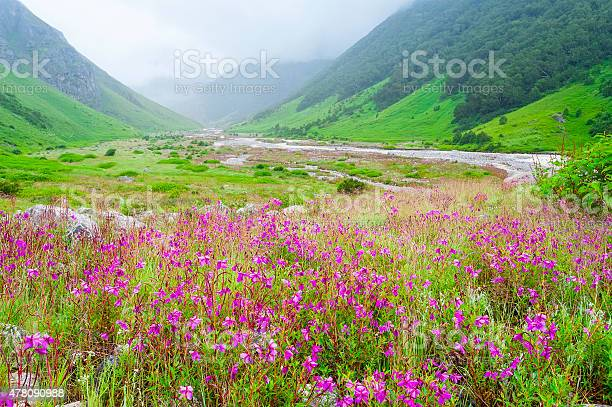 Photo of valley of flowers , india