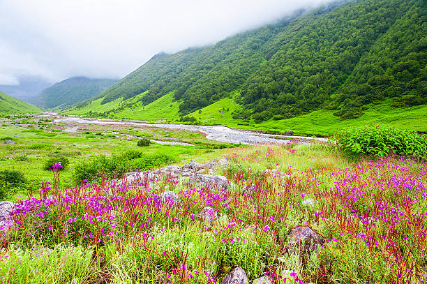 valley of flowers the scenery is breathtaking, uttarakhand india - fluxo d'água - fotografias e filmes do acervo