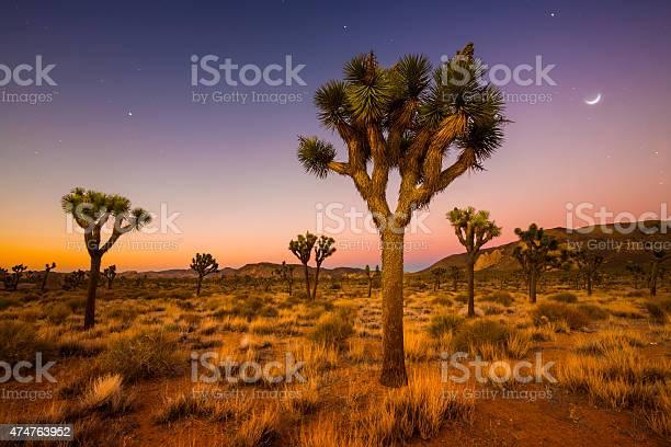 Photo of Valley of Joshua Trees