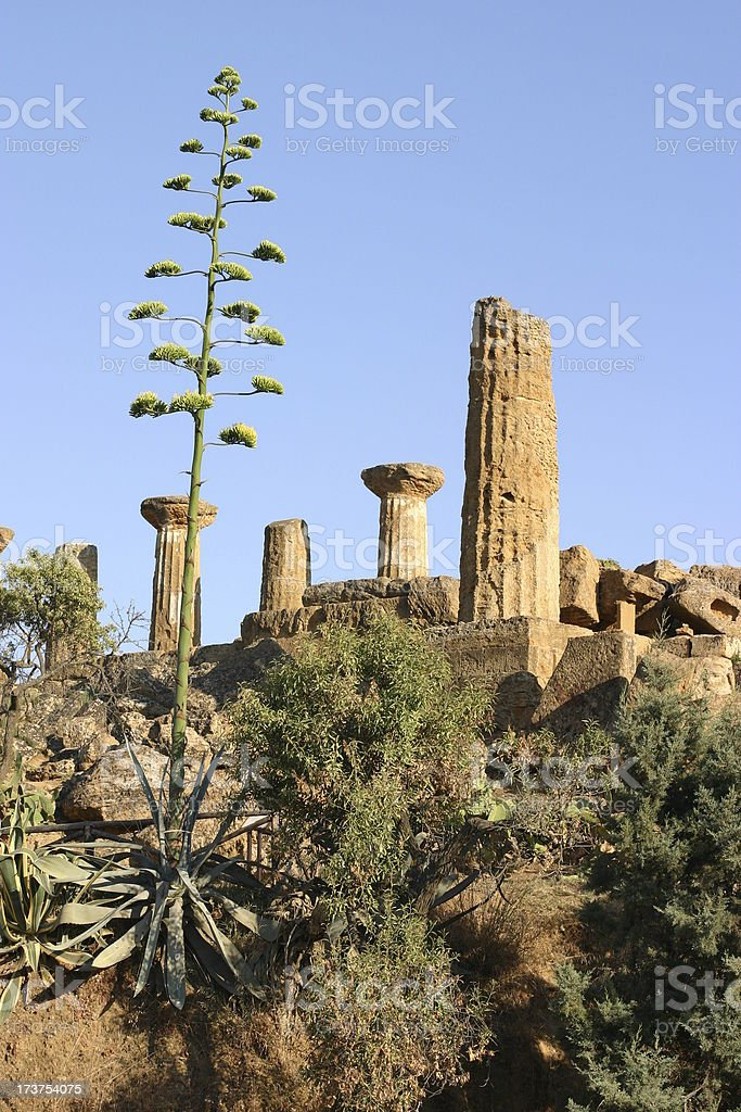 Valley of Temples in Agrigento, Sicily royalty-free stock photo