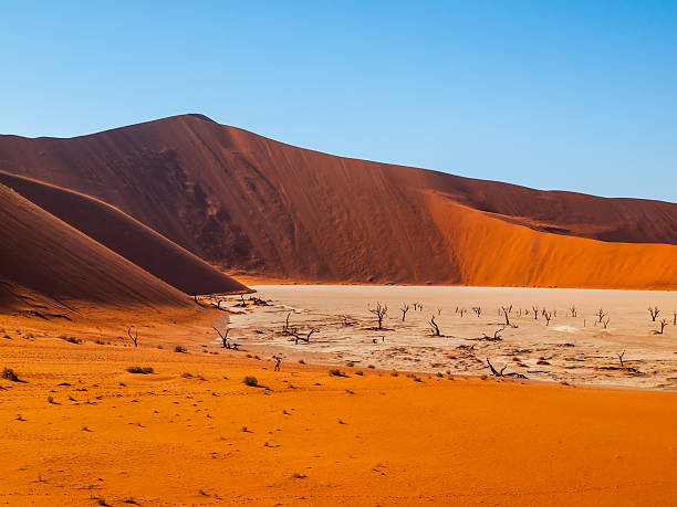 valley of the death in namibian sossusvlei - desolated stock pictures, royalty-free photos & images