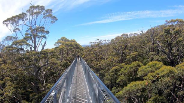 Valley of the Giants Tree Top Walk in Denmark Western Australia stock photo