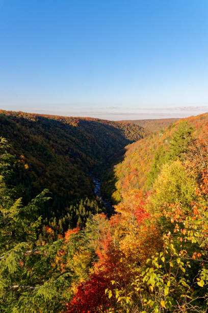 Valley with trees in fall colors stock photo