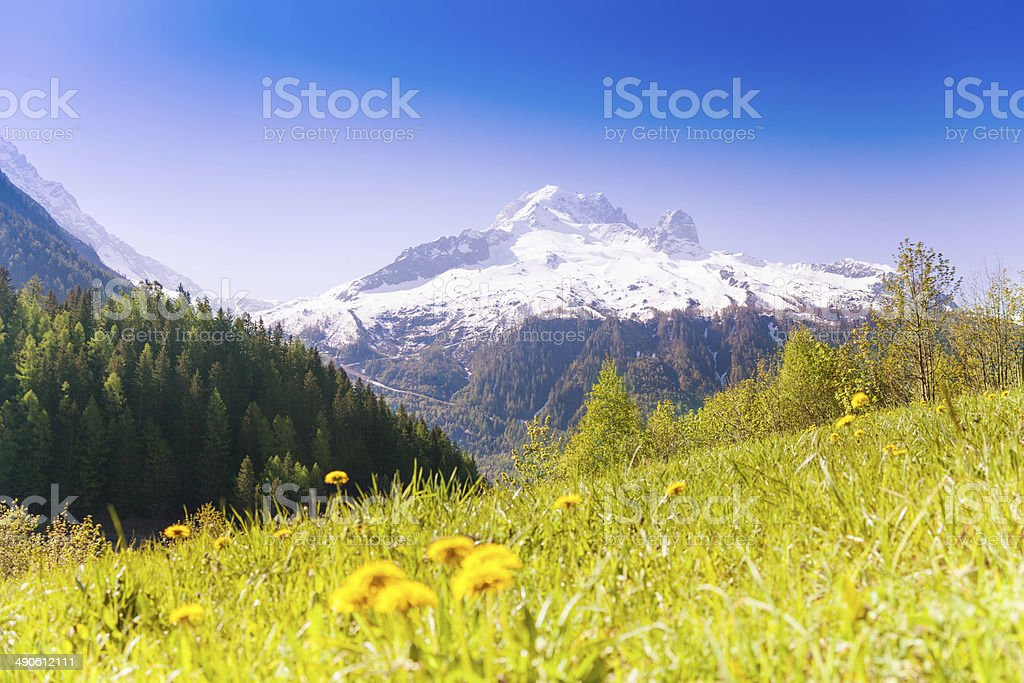 Valley with yellow dandelions near Mont Blanc royalty-free stock photo