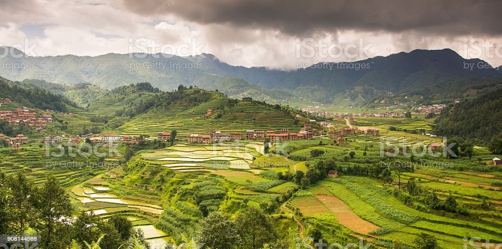 Valleys of paddy stock photo