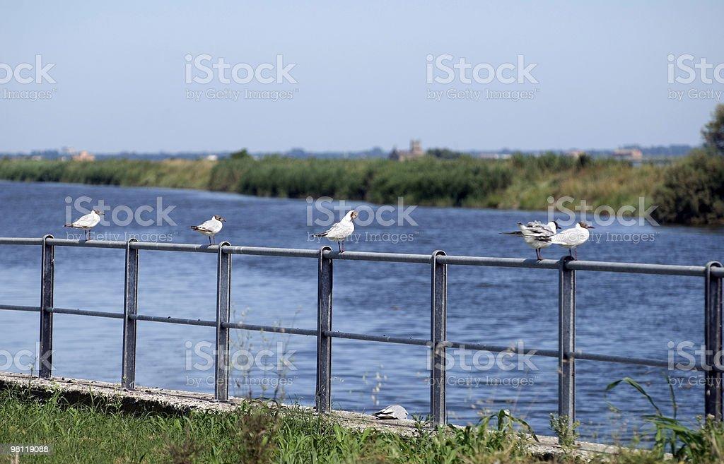 Valli di Comacchio (Emilia-Romagna, Italy, five water birds royalty-free stock photo