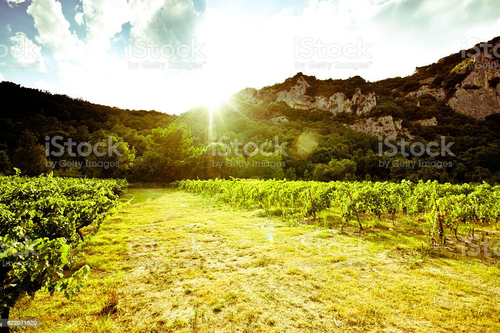 Vallon Pont D'arc vineyard - Photo