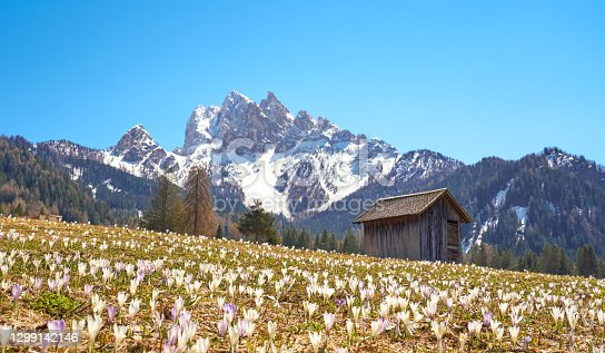 istock Vallone near Braies - Prags, in the province of Bolzano, Dolomites Alto Adige, Italy 1299142146