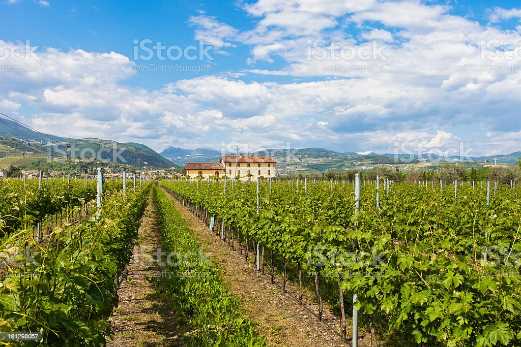 Valpolicella Countryside In Spring, Italy royalty-free stock photo