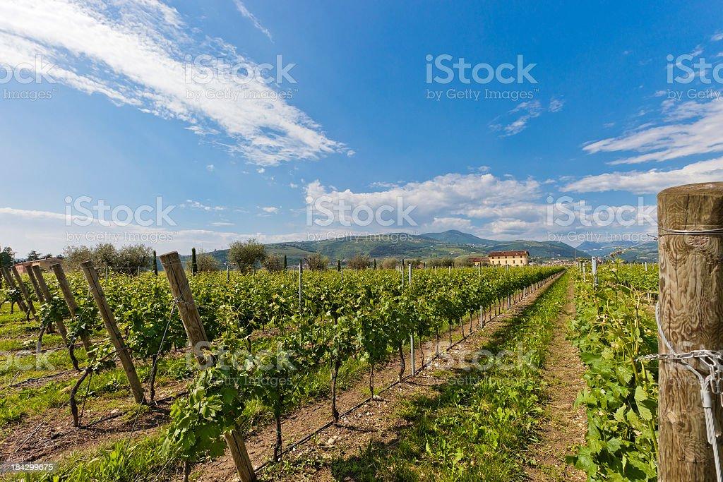 Valpolicella In Spring, Italy royalty-free stock photo