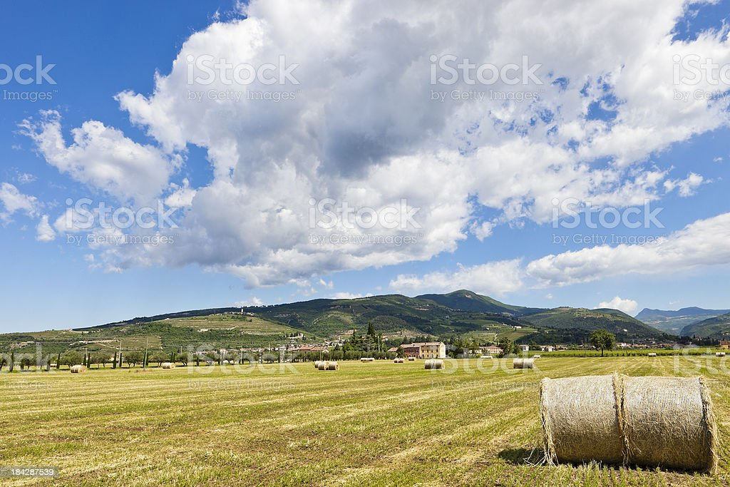 Valpolicella in Summer royalty-free stock photo