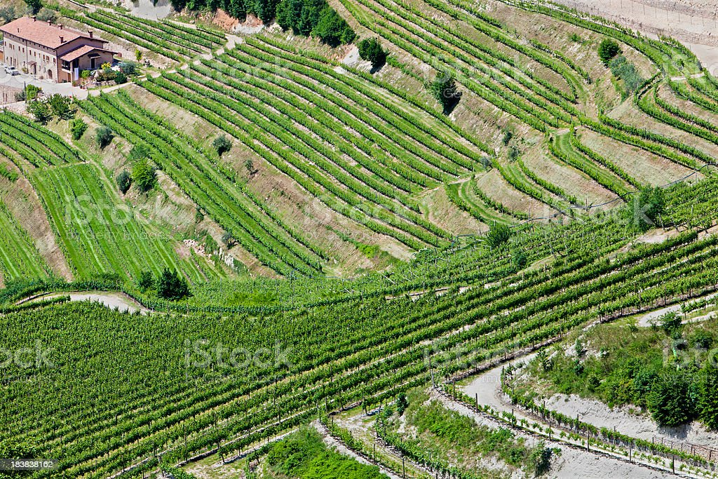 Valpolicella Vineyards From Above, Italy royalty-free stock photo