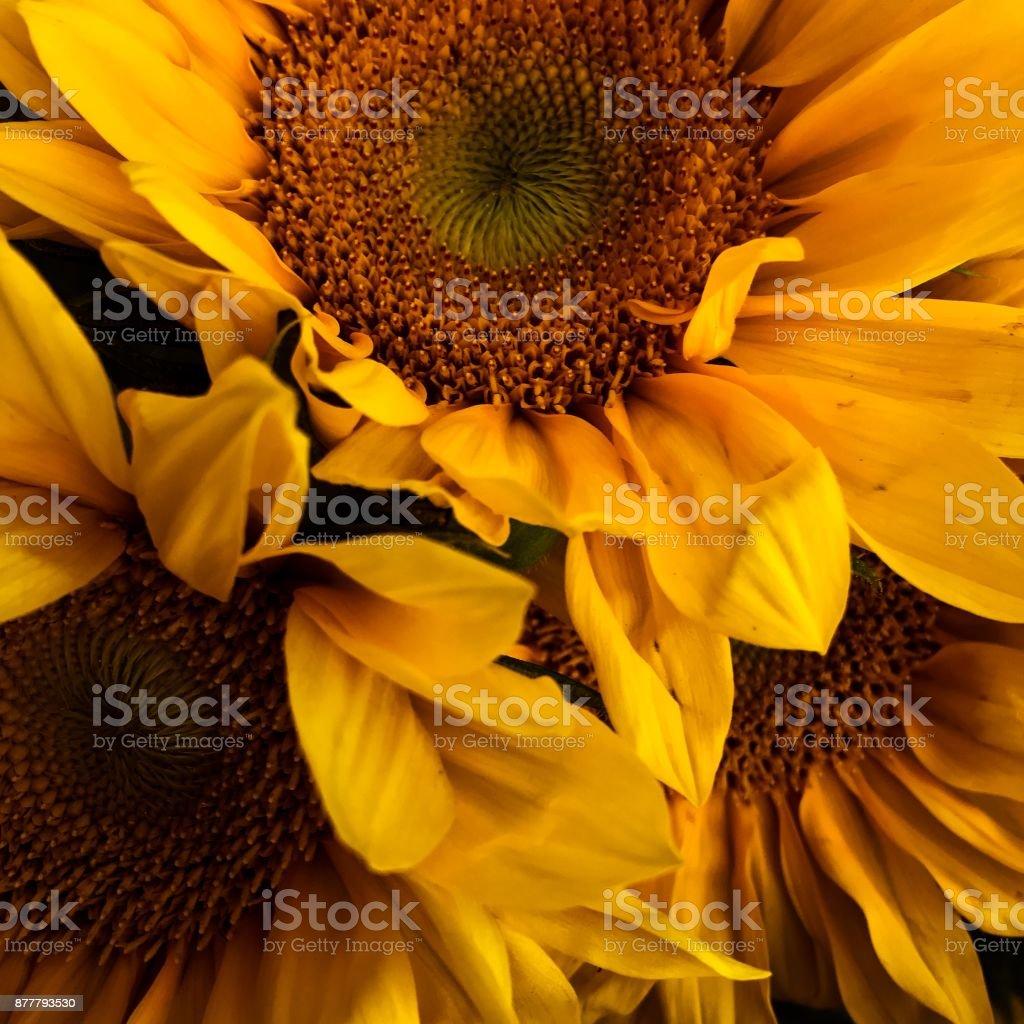 Van Gogh's California stock photo