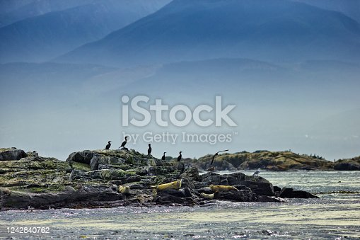 Sea lions off the West coast of Vancouver Island, British Columbia
