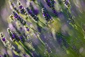 Wildflowers on Vancouver Island, British Columbia